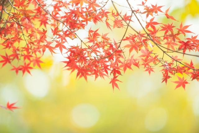 秋のダメージ