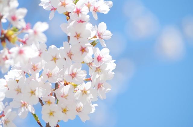 春のダメージ